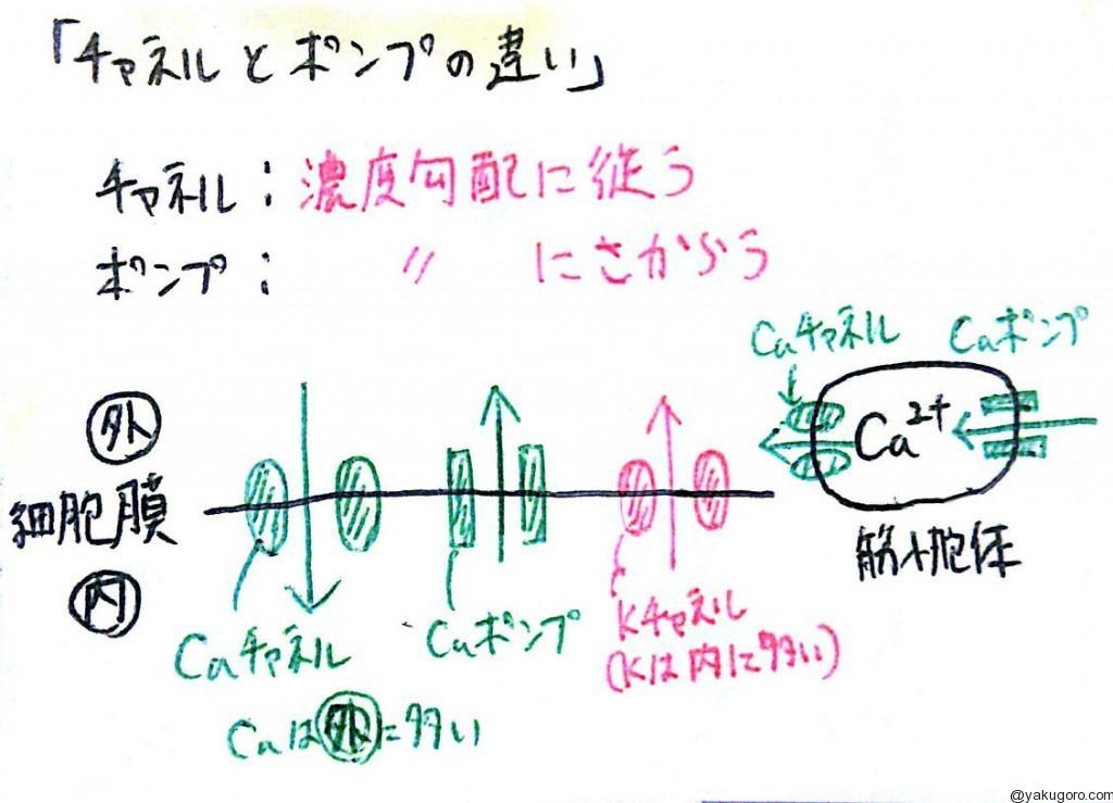 イオンチャネルとポンプの違い