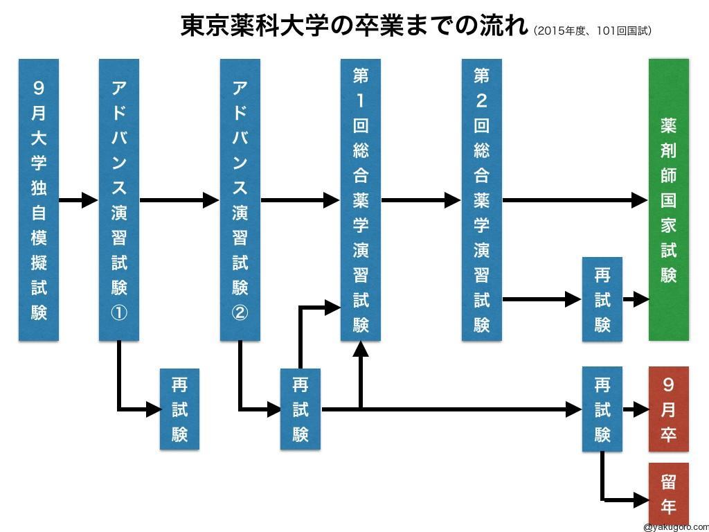 東京薬科大学卒業までのスケジュール